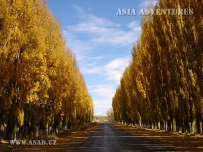 Дорога в Каракол. Тополиная аллея