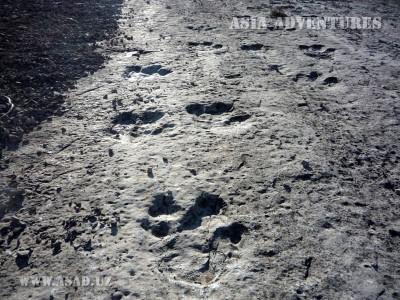 Plateau of Dinosaurs - Hodzhapil