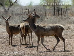 Lower Amudarya State Biosphere Reserve