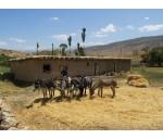 Агро - этнотур с хайкингом через кишлаки Нуратинского хребта