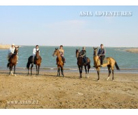 On Akhalteke horses in Karakum Desert