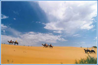 On Baktrian camel through Kyzyl-Kum desert
